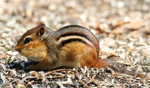 Come curare e allevare uno scoiattolo