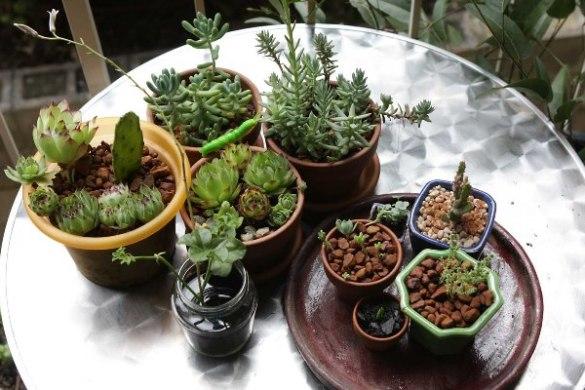 quali piante tenere in casa in inverno