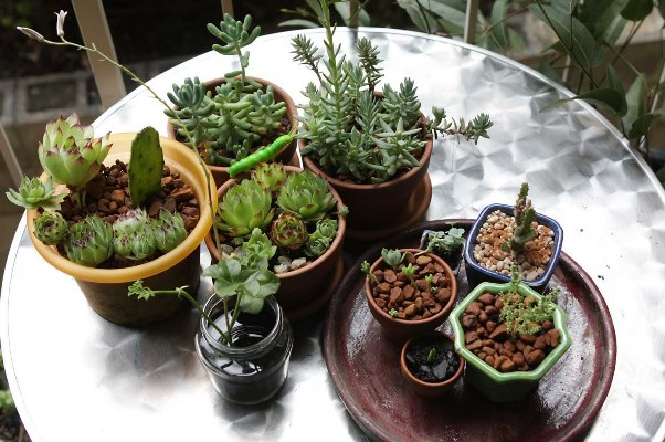 Quali piante tenere in casa in inverno soluzioni di casa - Piante da tenere in casa ...