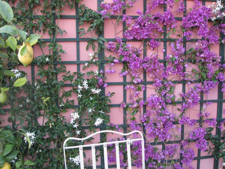 Come scegliere le piante rampicanti - Soluzioni di Casa