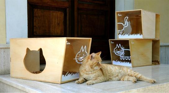 Come scegliere la cuccia del gatto