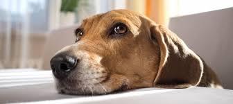 come abituare il cane a stare in casa da solo