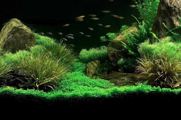 come realizzare un acquario zen