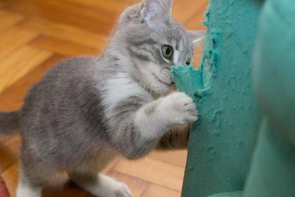 impedire-gatto-graffiare-mobili