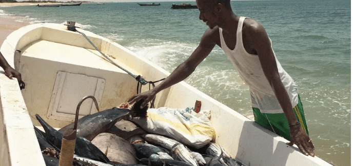 A boat full of fish is unloaded in Buluhaar, Somaliland