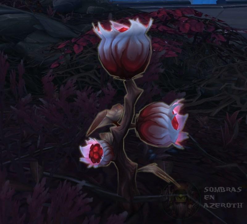 Flor de viuda