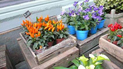 orange-bleue.info