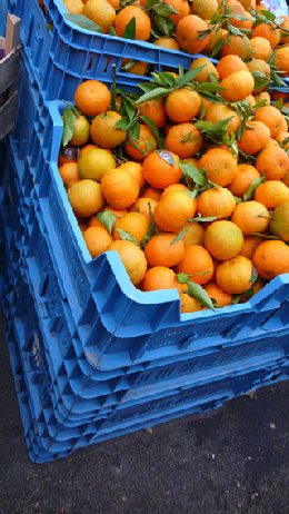 orange-bleue-jour-145.jpg