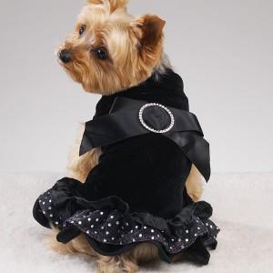 ...et voilà une tenue qui a du chien !