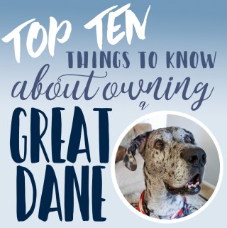 Tuesday Top Ten: Things to Know About Owning a Great Dane
