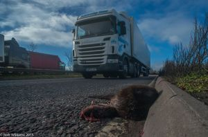 Dead otter Rob W