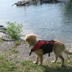 Bonded or Trained? Getting a Golden Retriever to Ride in a Kayak