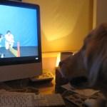 Tue Cute Tuesday – Television Addict Dog