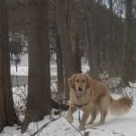 Tue Cute Tuesday – Walking in a Winter Wonderland