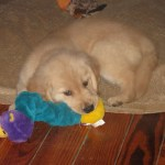 Dog Blogger Hop – Introductions