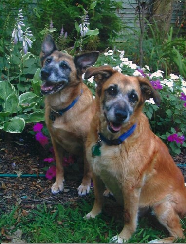 Old Dogs sitting in Garden