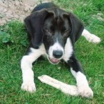 Wordless Wednesday – Adoptable Parker in Central New York