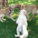Tue Cute Tuesday – Making Friends at the Lake