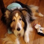 Surprised by Dog: Happy Ending Stories