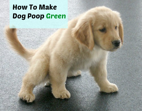 how to help your dog poop in the snow