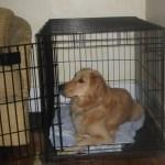 Don't Take Bad Dog Training Advice
