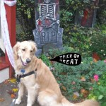 Caption the Halloween Dog – Wordless Wednesday