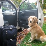 If Dogs Planned Road Trips…