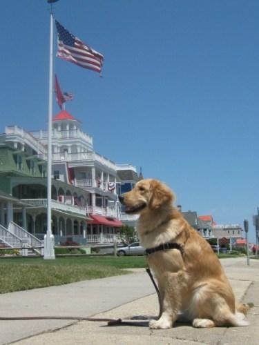 Golden Retriever admiring Cape May hotels