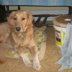 Wordless Wednesday – Honey is Sleeping With the Enemy