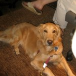 What is BlogPaws Like for a Dog?