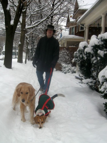 Honey the golden retriever leads the walk.