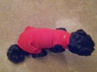 Make this warm and comfy dog coat without sewing a stitch.
