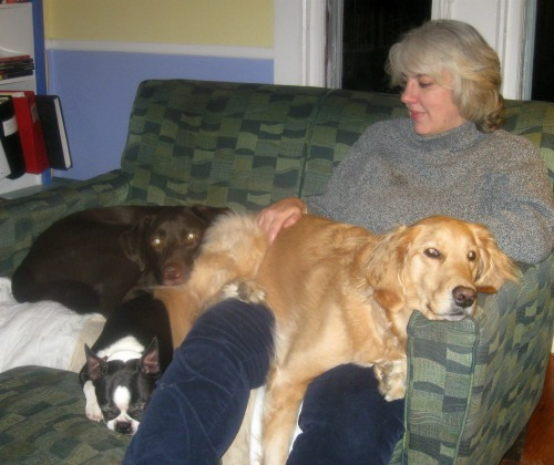 Honey the golden retriever and friends on the couch.