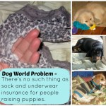 Dog World Problems – No Puppy Insurance