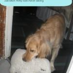 Expensive Dog Toys – Dog World Problem