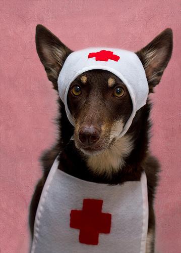 A dog nurse.
