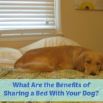 6 Benefits of Sharing A Bed With Your Dog