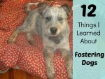12 Things I learned from fostering dogs.