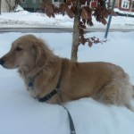 Finding Safe Places To Work With Your Dog Off-Leash