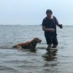Teaching A Golden Retriever To Swim