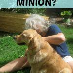 Oh No! I'm A Minion!
