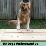 Do Dogs Understand Us Better Than We Understand Them?