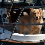 A Dog's Life Aboard A Boat
