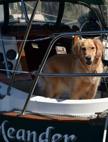 I'm Honey. And I live on a boat.