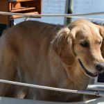 Boat Training For Humans And Dogs