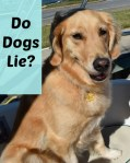 Do dogs lie?