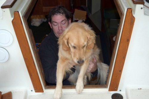 Honey the golden retriever steps out of the companionway.