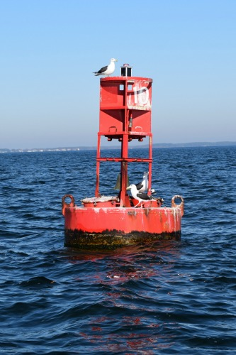 Red buoy in the Chesapeake with birds.