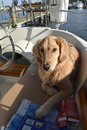 Honey the golden retriever in the cockpit at Deltaville.