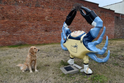 Honey wonders about Crabby the Crabber.